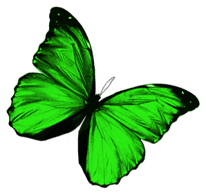 The Papillon Project