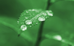 being with nature - nature drops